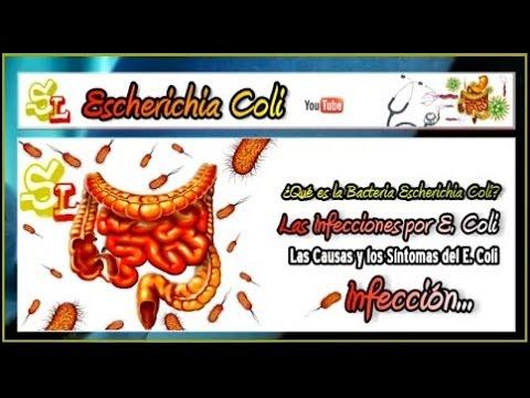 Infecciones por Escherichia Coli, Diarrea Hemorrágica por E  Coli, Causas y Síntomas del E  Coli