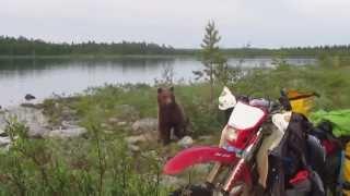 Как мы на Кольском от медведя отбивались....