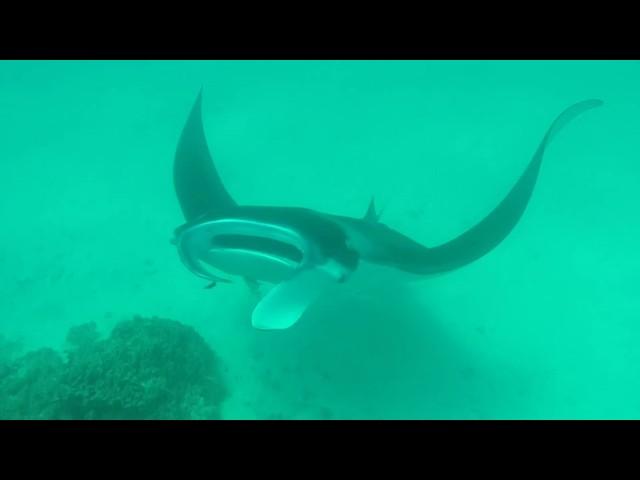 Petits et gros poissons du lagon de Bora Bora