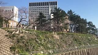 四ツ谷駅の桜 Tokyo Cherry Blossom 2020 JR Yotsuya Station 線路沿いの桜~JR四ツ谷駅周辺の桜の咲き具合はこんなカンジ(2020.3.25)