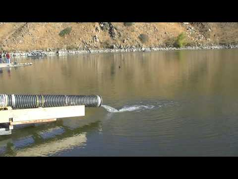 HD Video - Huge Trout Stocking - 20+ Pounders !!