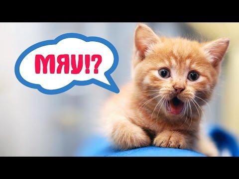 Вопрос: Есть ли люди, которые понимают мяуканье кошек Как они это делают?