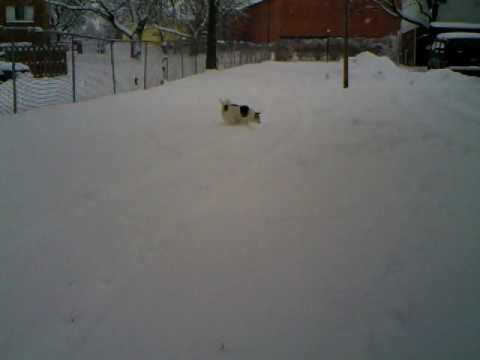 Pete the dog in the snow. thumbnail