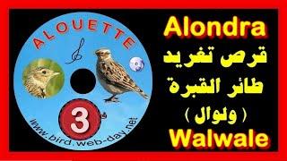 CD CHANT DE  ALOUETTE (walwal)1