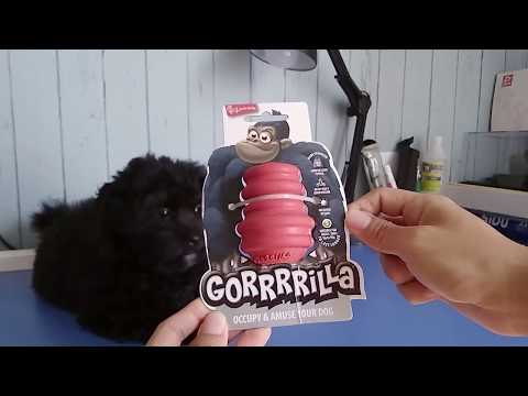 Toy Poodle play with Food Dog Toy - GORRRRILLA
