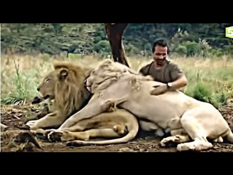 Au Royaume Du Lion Blanc Documentaire Exceptionnel en Entier  national geoghraphic HD