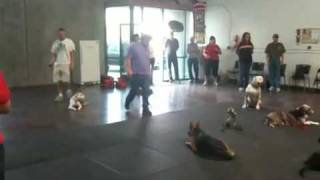 Dog Training Classes -las Vegas