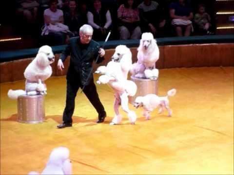 Zirkus Minsk - Programm ART SCHOCK (цирк Минск - программа АРТ ШОК)