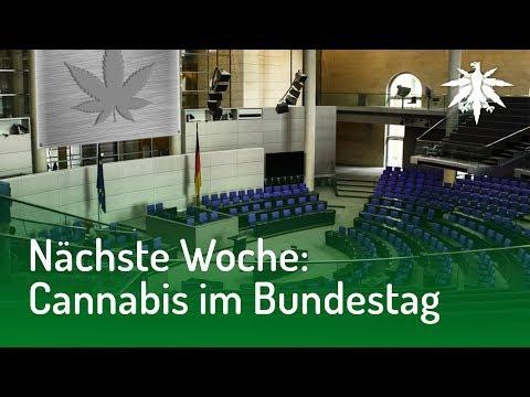 Nächste Woche: Cannabis im Bundestag | DHV News #154