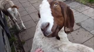 Тайная жизнь домашних животных ЛУЧШИЕ ПРИКОЛЫ С ЖИВОТНЫМИ ОКТЯБРЬ 2016 #1