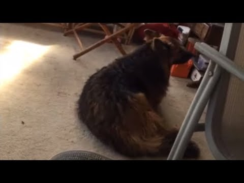Parrot Tricks Dog Into Howling By Hilariously Imitating Him