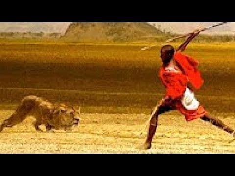Los Leones vs Los Guerreros Masai ~ Batalla Increíble [Documentales de National Geographic WILD]