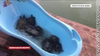 15.07.2018 Неравнодушные севастопольцы организовали эвакуацию красноухих черепах