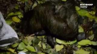 Журналісти знайшли у лісі рештки вбитих тварин. Міліція на виклик не приїхала