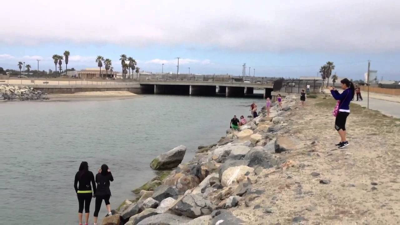 Hb jetty seal in the water youtube for Seal beach fishing