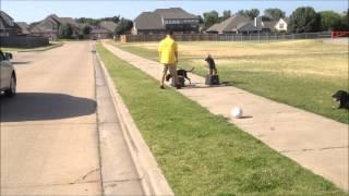 Obedience Training 2 Puppys - Tulsa, Ok