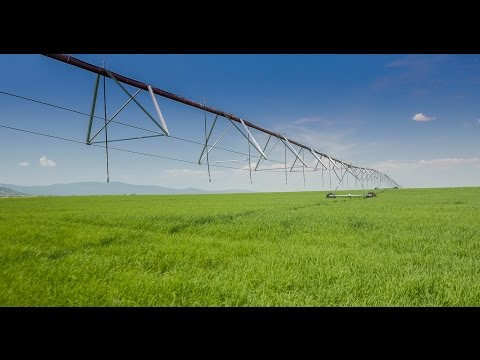 Northern California Ranch | MJ Pivot Ranch Lassen County CA
