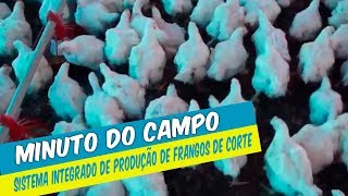 MINUTO DO CAMPO - SISTEMA INTEGRADO DE PRODUÇÃO DE FRANGOS DE CORTE