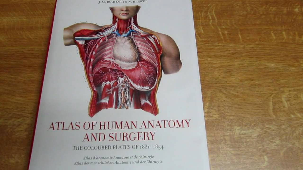 Presentation Of The Best Book Of Anatomy The Bourgery Jacob