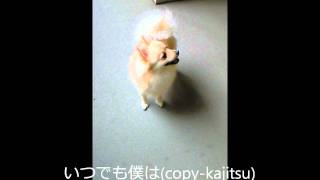 唄人羽が楽曲提供した塚本高史君の『いつでも僕は』を 凄くシンプルにシ...