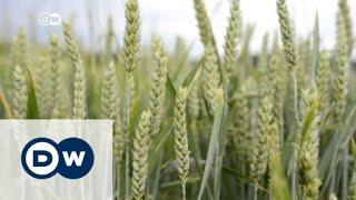 شركات الصناعات الزراعية الكبرى تتحكم بأسعار الغذاء عالمياً | الأخبار