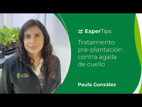 Expertips Tratamiento pro-plantación contra Agalla de Cuello