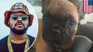 United Airlines sends rapper Schoolboy Q's dog to wrong city in latest PR nightmare - TomoNews