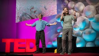 The wonderful world of life in a drop of water | Tom Zimmerman and Simone Bianco