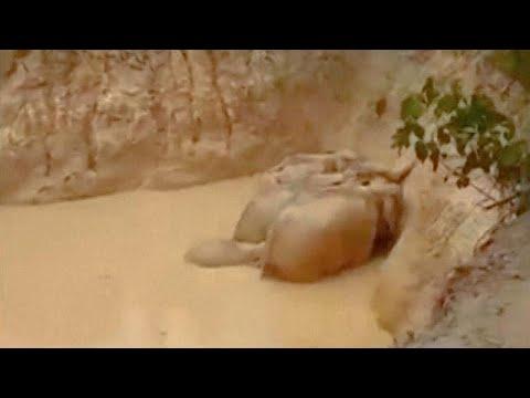 شاهد: إنقاذ 5 فيلة من وسط حفرة عميقة في ماليزيا  - نشر قبل 2 ساعة