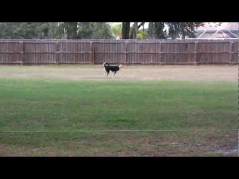 chena-lure-coursing-december-2012