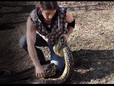 Download Urban Tarzan Tames 16-foot Snake during Interview...