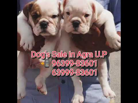 Baixar AGRA DOG BAZAR - Download AGRA DOG BAZAR | DL Músicas