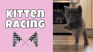 Kitten Racing: 5 weeks old