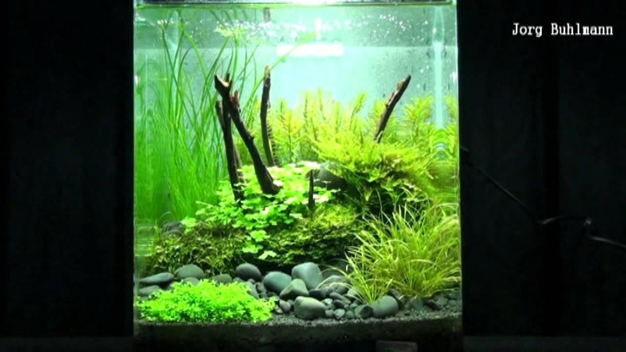 Nano aquarium the art of the planted aquarium 2012 for Plante nano aquarium