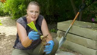Oklahoma Gardening Episode #4706 (08/08/20)