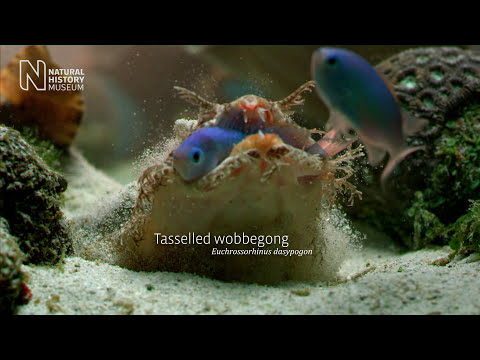 The Smart, The Strange And The Dangerous: Life On A Coral Reef | Natural History Museum