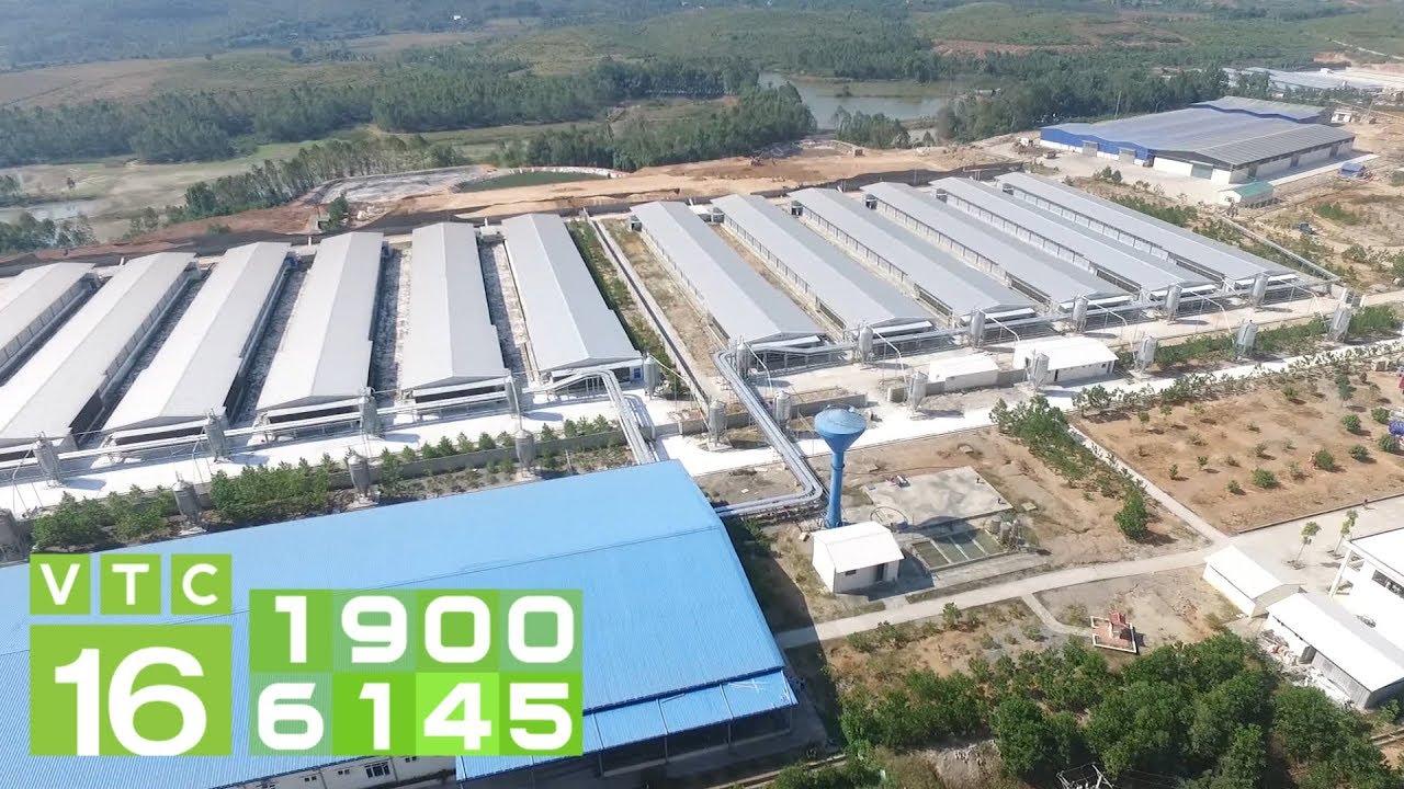Trại gà 40 ha thải 50 tấn phân/ngày khiến người dân khiếp sợ   VTC16