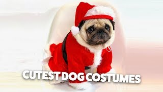 funniest dog outfits