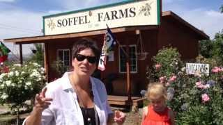 Mom, Can I Have A Bite Visits Soffel Farms In Redlands, CA To Pick Blueberries