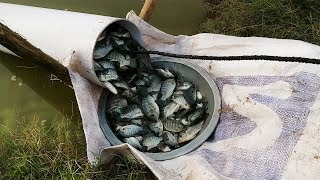 Amazing Fish Trapping System, New Technique of Catching Fish with Pipes