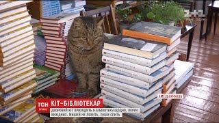 """За їжу й тепло: на Хмельниччині знайшли кота, який десять років """"працює"""" бібліотекарем"""