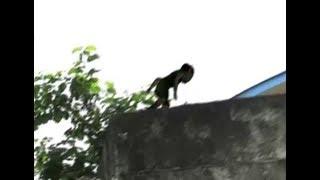 Duende captado en video 2017 Real ? / strange (Goblin) creature caught on tape