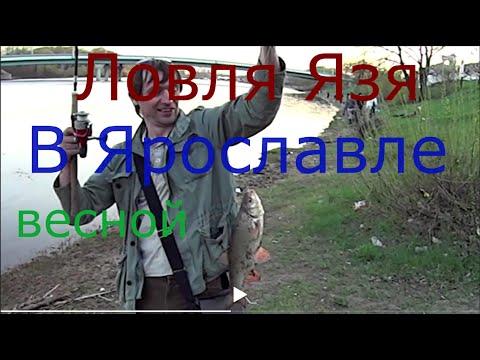 Ловля Язя ,весной, на донку на червяка выползка - YouTube