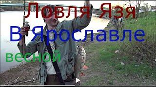 Ловля Язя ,весной, на донку на червяка выползка(Ловля Язя в Ярославле,рыбалка на Которосли ,Рыбалка на Волге С отходом льда наступает замечательное для..., 2016-05-03T15:51:17.000Z)