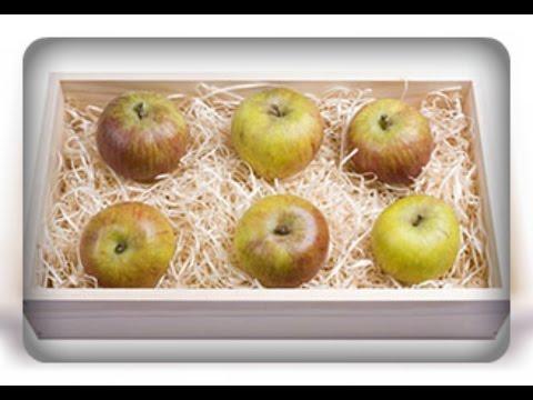 Яблоки моченые на зиму