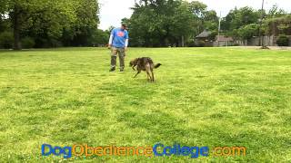 Kahn Dog Obedience Training Memphis