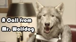 A Call From Mr. Wolfdog