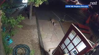 No vacancy? Mountain lion visits motel but doesn't stay long