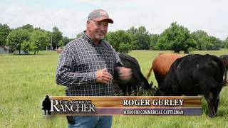 Crossbreeding with Beefmasters