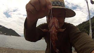 【釣り】岡山県「日生港」カサゴ釣れた! thumbnail